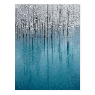 Ice Forest Postcard