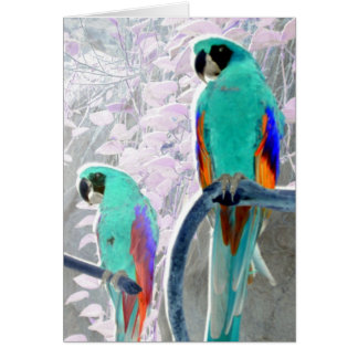 Ice Parrots Card