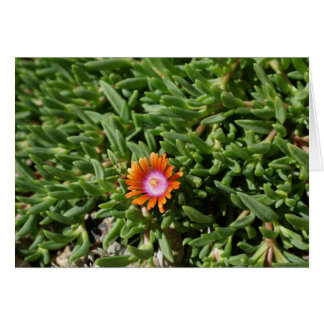 Ice Plant, Edgewood NM Card