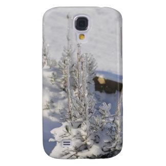 Iced fir tree with snow