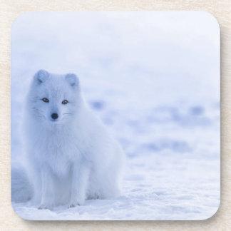 iceland animals power white coaster