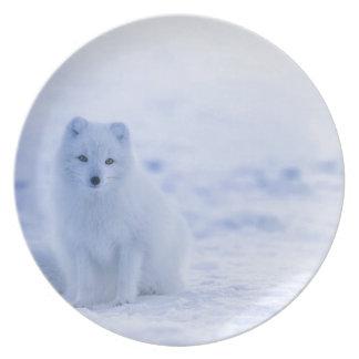 iceland animals power white plate