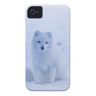 Iceland Arctic Fox Case-Mate iPhone 4 Cases