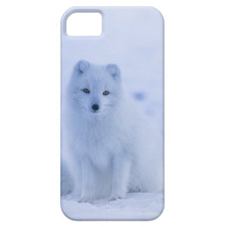 Iceland Arctic Fox iPhone 5 Case