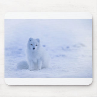 Iceland Arctic Fox Mouse Pad