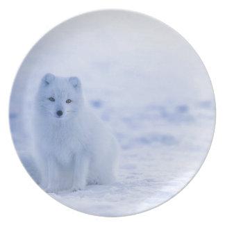 Iceland Arctic Fox Plate