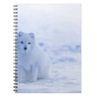 Iceland Arctic Fox Spiral Notebook