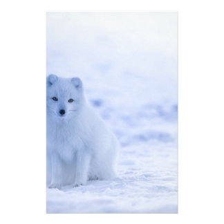 Iceland Arctic Fox Stationery