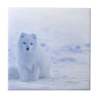 Iceland Arctic Fox Tile