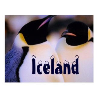 Iceland arctic penguins postcard