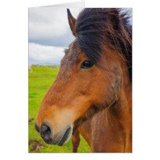 Iceland. Eyrarbakki. Icelandic horse Card