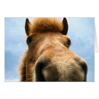 Iceland Pony Head Card