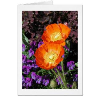 """Iceland Poppy"" Card"