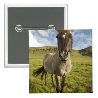 Iceland, Reykjavik. Frontal view of Icelandic 2 Inch Square Button