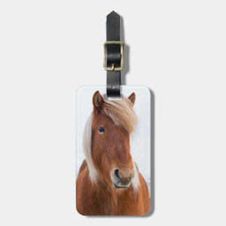 Icelandic Horse during winter  2 Luggage Tag