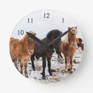 Icelandic Horse during winter on Iceland Round Clock