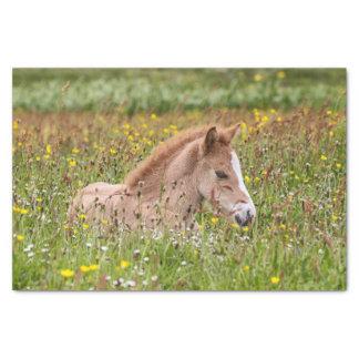 Icelandic Horse Foal Tissue Paper