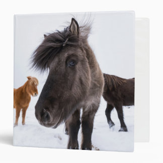 Icelandic Horse portrait, Iceland 3 Ring Binders
