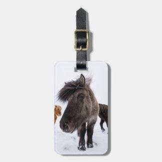 Icelandic Horse portrait, Iceland Luggage Tag