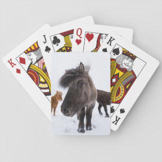 Icelandic Horse portrait, Iceland Playing Cards