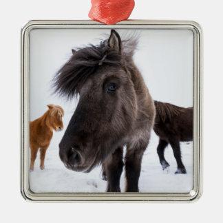 Icelandic Horse portrait, Iceland Silver-Colored Square Ornament