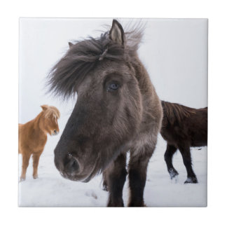 Icelandic Horse portrait, Iceland Tile