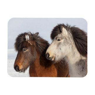 Icelandic Horse profile, Iceland Rectangular Photo Magnet