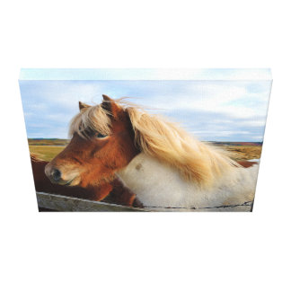 Icelandic horse with blond mane canvas print
