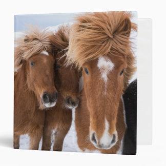 Icelandic Horses nuzzle, Iceland 3 Ring Binder