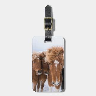 Icelandic Horses nuzzle, Iceland Luggage Tag