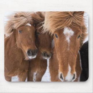 Icelandic Horses nuzzle, Iceland Mouse Pad
