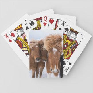 Icelandic Horses nuzzle, Iceland Playing Cards