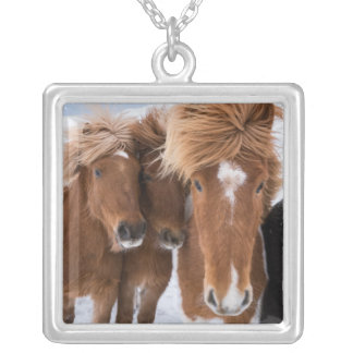 Icelandic Horses nuzzle, Iceland Silver Plated Necklace
