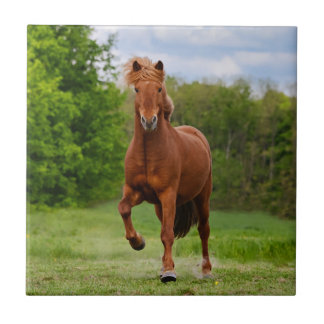 Icelandic Pony at a Tölt Funny Photo Horse Lovers Tile
