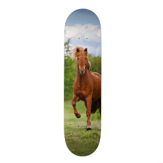 Icelandic Pony Runs Tölt Funny Photo Horse Lovers Skate Decks