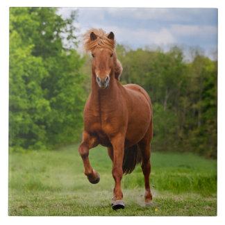 Icelandic Pony runs Tölt Funny Photo Horse Lovers Tile