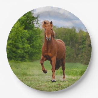 Icelandic Pony Tölt Funny Photo Horse Lovers party Paper Plate