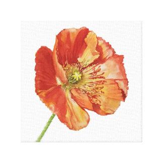 Icelandic Red Poppy Canvas Print