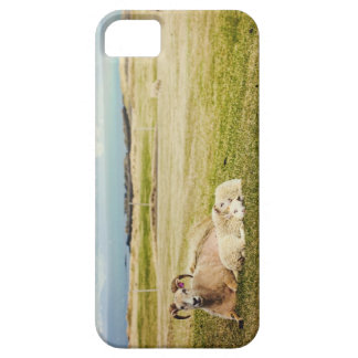 Icelandic Sheep iPhone case