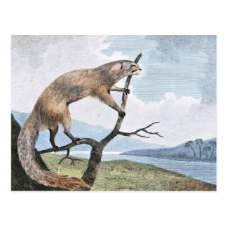 Ichneumon (Mongoose) Wildlife Art Postcard