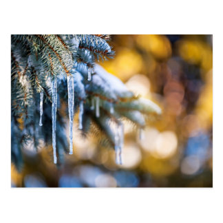 Icicles on fir tree in winter postcard