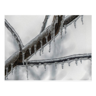 Icy Branch Postcard