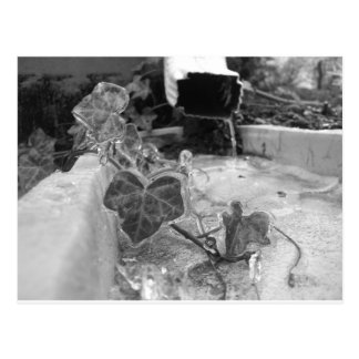 Icy Vine On Drain Pipe Postcard