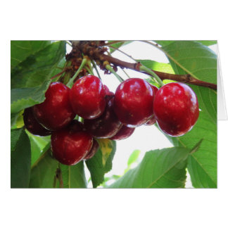 Idaho Cherries Card