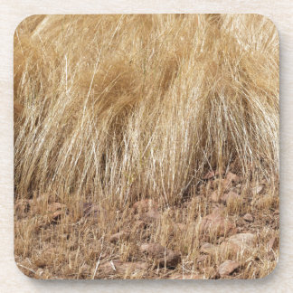 iDetail of a teff field during harvest Coaster