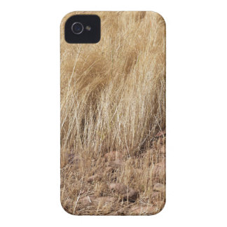 iDetail of a teff field during harvest iPhone 4 Case