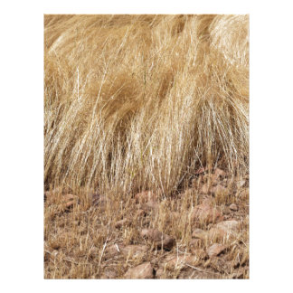 iDetail of a teff field during harvest Letterhead