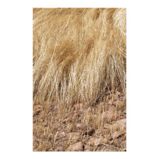 iDetail of a teff field during harvest Stationery