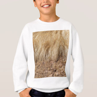 iDetail of a teff field during harvest Sweatshirt