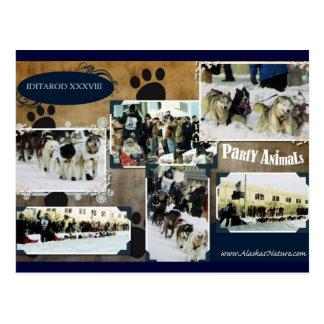 Iditarod  Postcard